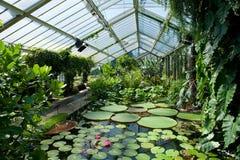Das Waterlily Haus, Kew Gärten Lizenzfreie Stockfotos