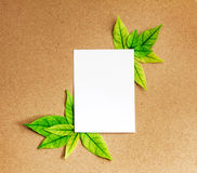 Das weiße Blatt des leeren Papiers mit neuem Frühlingsgrün-Blätter borde Stockbilder