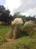 Das Weidenkätzchen stockbild
