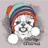 Das Weihnachtsplakat mit dem Bildhundeporträt im Winterhut Auch im corel abgehobenen Betrag Stockbild