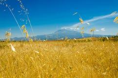Das Weizenfeld stockbilder