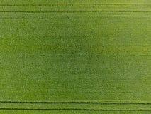 Das Weizenfeld ist grün Junger Weizen auf dem Feld Ansicht von oben Struktureller Hintergrund des grünen Weizens Grünes Gras Lizenzfreies Stockbild
