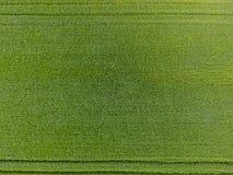 Das Weizenfeld ist grün Junger Weizen auf dem Feld Ansicht von oben Struktureller Hintergrund des grünen Weizens Grünes Gras Lizenzfreies Stockfoto