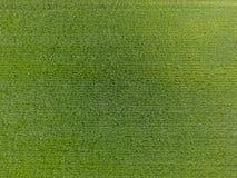Das Weizenfeld ist grün Junger Weizen auf dem Feld Ansicht von oben Struktureller Hintergrund des grünen Weizens Grünes Gras Stockfotos