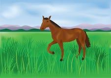 Das wilde braune Pferd lässt auf der Wiese weiden Stockbild