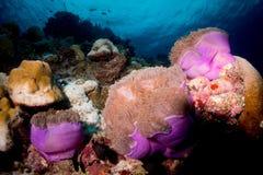 Das wilde eingelassen, kein Aquarium Lizenzfreie Stockfotos
