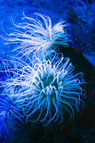 Das wilde eingelassen, kein Aquarium Lizenzfreies Stockfoto