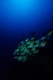 Das Wrack des silbernen Sternes, Mauritius Lizenzfreies Stockbild
