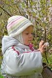 Das zweijährige Mädchen betrachtet Blumen der chinesischen Kirsche in einem Frühlingsgarten stockfotos