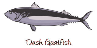Dash-and-dot Goatfish, Color Illustration Stock Image