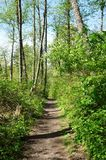 Dash Point State Park. Spring trail. Green fresh forest. Royalty Free Stock Photo
