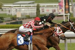Dash to the Finish Line!. Jockey Tyler Baze (foreground) urges his mount (Plan for Fun) to the lead to win a claiming race at Santa Anita Park, Arcadia stock photography