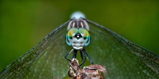Dashing Blue Dasher II Royalty Free Stock Image