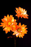 Dasiy Floral Arrangement Royalty Free Stock Photo
