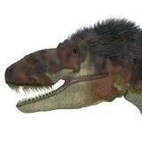 Daspletosaurus Dinosaur Head Stock Photography
