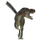 Daspletosaurus Predator Stock Image
