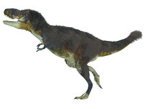 Daspletosaurus Side Profile Stock Photo