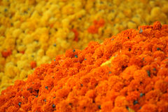 Dassera Flowers. Bright orange Marigold flowers on the backdrop of yellow Marigold flowers. This flowers are traditionally used during the rituals of Dassera Stock Image