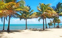 Dat strand in Dangriga, Belize Royalty-vrije Stock Fotografie