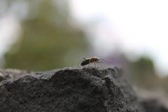 Dat uiterst kleine insect in de muur royalty-vrije stock foto