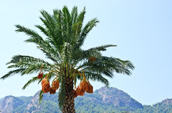 Data die op de palm hangen Royalty-vrije Stock Afbeelding