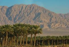 Data le piantagioni con le montagne Fotografia Stock Libera da Diritti