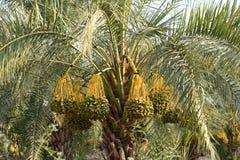 Data på en palmträd Royaltyfri Fotografi