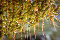 Data på en palmträd på en solig dag albacoren arkivbilder