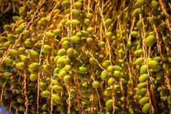 Data på en palmträd på en solig dag albacoren royaltyfri bild