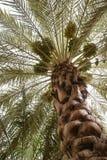 Data a palmeira imagem de stock royalty free