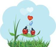 Data romantica delle coccinelle illustrazione di stock
