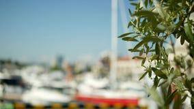 A data sae em um fundo borrado porto com os mastros brancos dos iate e dos navios no mar fotos de stock