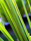 datalistväxt för 15 bakgrund royaltyfri foto