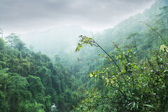 Datanla waterfall, Dalat. Vietnam Stock Image