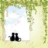 Datazione del gatto di primavera Fotografie Stock