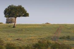 Date de désert sur Mara photos stock