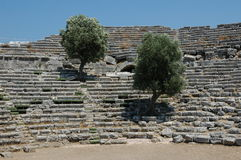 Date of olive trees in the hostorical amphitheater Stock Photos