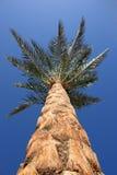 Date-palm Stock Photos