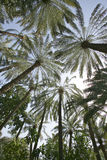 Date Palm Abstract Stock Photos