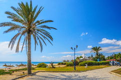 Date palm on the beach in Hammamet Tunisia Royalty Free Stock Images