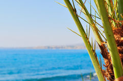 Date palm branches Royalty Free Stock Photo