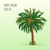 Date palm with fruits Stock Photos