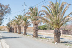 Date palm lined street in Carnavon Stock Images