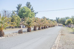 Date palm lined street in Carnavon Royalty Free Stock Photo