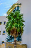 Date palm near white buidling in Hammamet Tunisia Stock Image