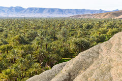 Date palm oasis in Morocco Royalty Free Stock Images