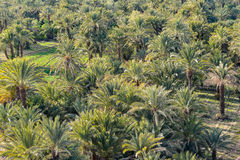 Date palm oasis in Morocco Stock Photos