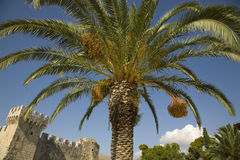 Date palm and old castle Stock Photo