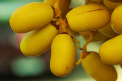 Date Palm,palm,flower,plant Royalty Free Stock Images