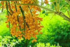 Date Palm,palm,flower,plant Stock Photos